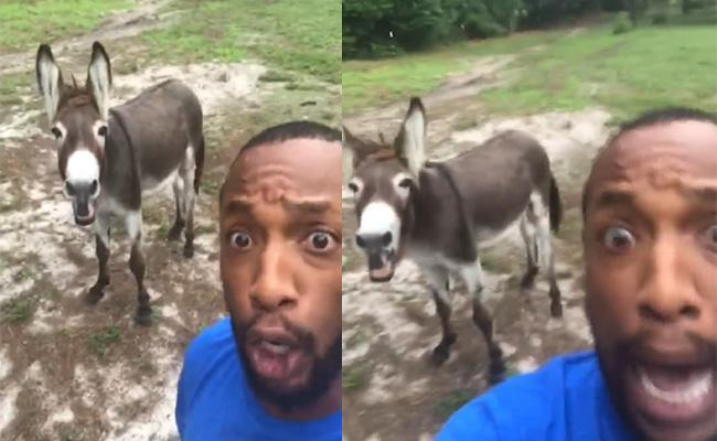 Donkey Sings Along With Owner - Sakshi