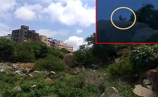 Leopard triggers panic at Pragati Nagar - Sakshi