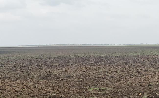 Farmers Farming In Nizamsagar Project Catchment Area - Sakshi