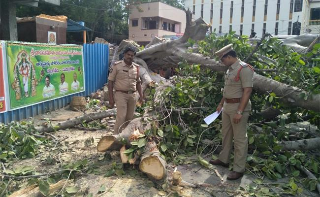 Women Dies After Banyan Tree falls On Her In West Godavari - Sakshi