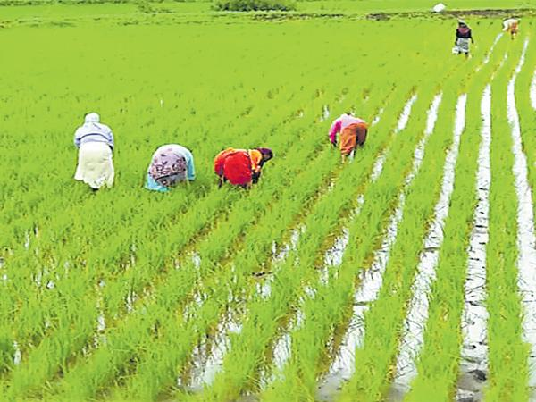 Costless cultivation with zero budget - Sakshi