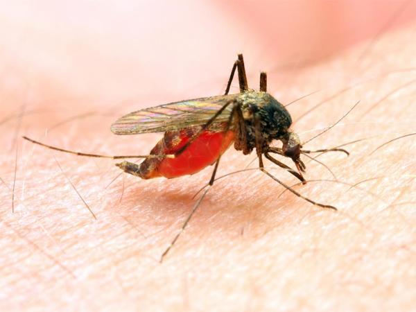 New antidote to malaria - Sakshi