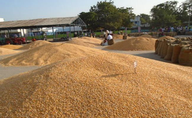 Farmers Not Getting Supporting Price on Crops - Sakshi