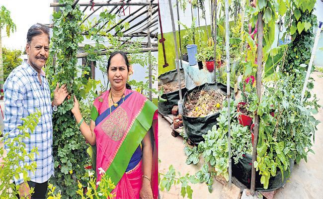 Inti Panta Special Story - Sakshi