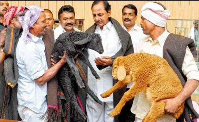 Second Phase Of Sheep Distribution Process Not Started In Suryapet District - Sakshi
