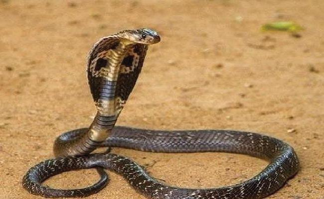 Snake Found On Bus In Asifabad - Sakshi
