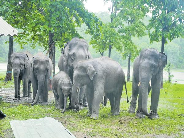 Kaleshwaram tourists are interested visit Elephants Park - Sakshi