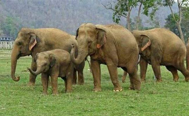 Six Elephants Hulchul In Srikakulam District - Sakshi
