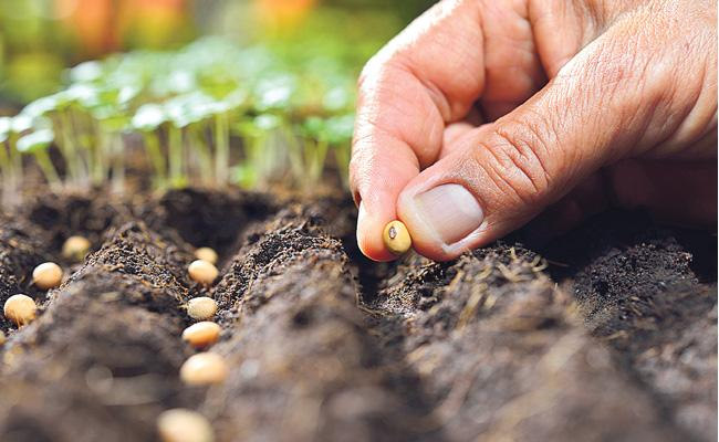 Private Companies Selling Adulterated Seeds in Telangana - Sakshi