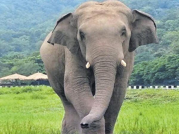 Psychological stress for Elephants - Sakshi