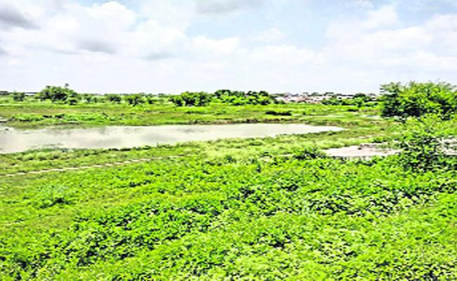 Less Rainfall In Medak District - Sakshi