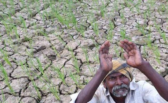 Deficit Rainfall in Mahabubnagar District - Sakshi