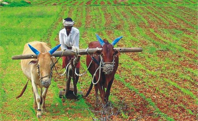 Banks Collect Interest Whether Farmers Not Pay Crop Loans Intime In Peddaplli - Sakshi