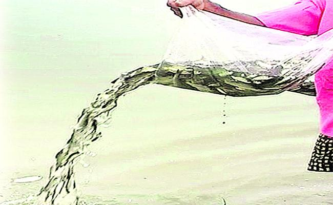 310 Lakes Ready To Fish Cultivating In Warangal District - Sakshi