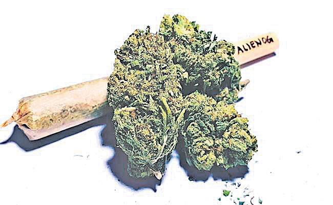 Marijuana Smuggling in Hyderabad - Sakshi