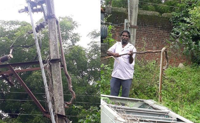 Snake Crawled To Electric Pole And Died In Kesamudram, Warangal - Sakshi