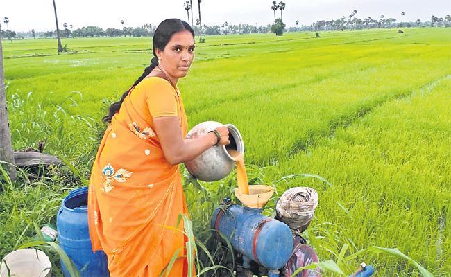 Organic Food good For Health - Sakshi
