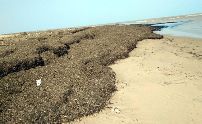 Garbage Issue In Sea Coastal Area In East Godavari - Sakshi