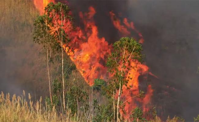 How We Can Help The Amazon Rainforest Which Is On Fire - Sakshi