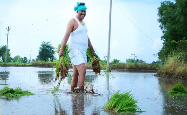 Choppadandi MLA Sunke Ravi Shankar Working In  Farm - Sakshi