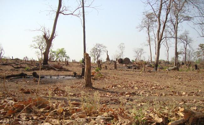 Endangered Forest in Adilabad - Sakshi