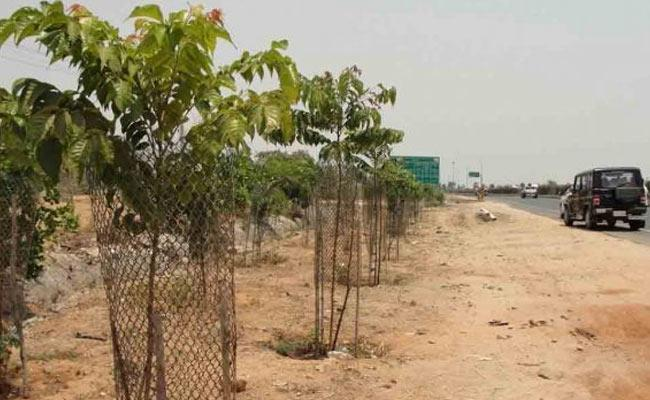 Official Imposes Rs 500 Fine For Spoil Haritha Haram Plants In Chevella - Sakshi