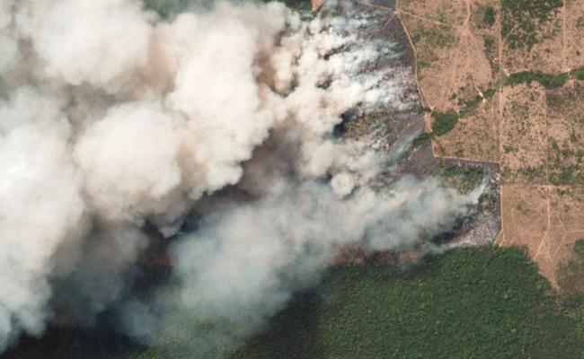 Who Burn The Amazon Forest! - Sakshi