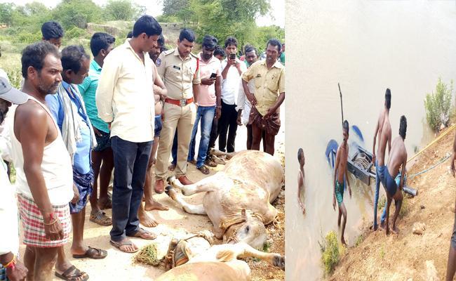 Bulls Killed in Nettempadu Canal In Gadwal - Sakshi