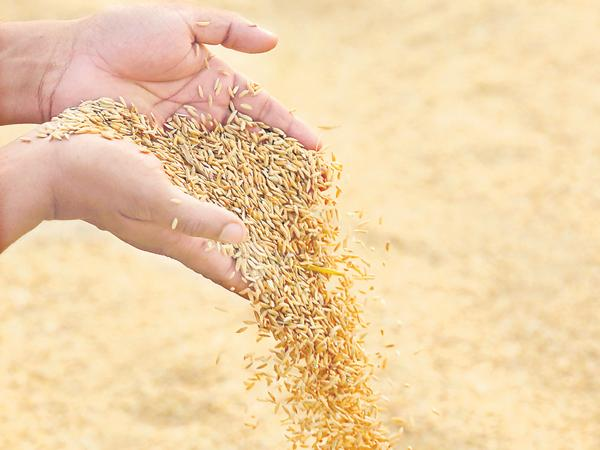 Country foodgrain production is above 28 crore tonnes - Sakshi