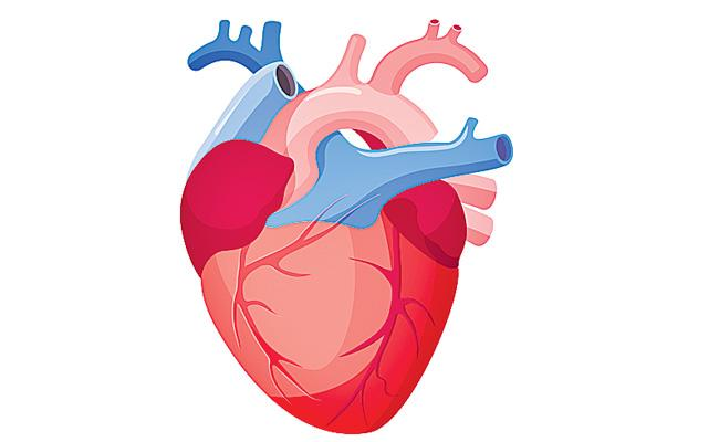 Cardiology Counselling - Sakshi