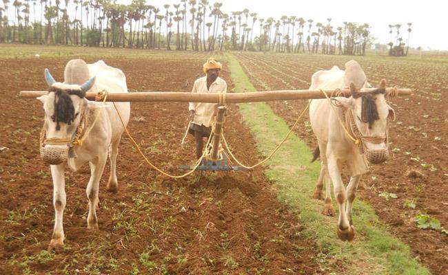 Seasonal Rain Useful To Farmers In Andhra pradesh - Sakshi