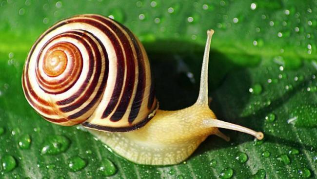Australian Scientists Discover Snail Glue Cure Cancer - Sakshi