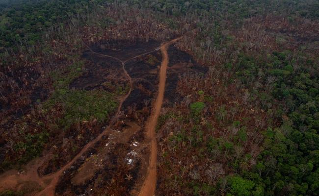 Editorial On How Amazon Rainforest Could Self Destruction - Sakshi
