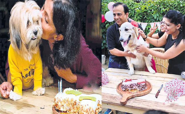 Pet Lovers Celebrate Dogs Birthdays in Hyderabad - Sakshi