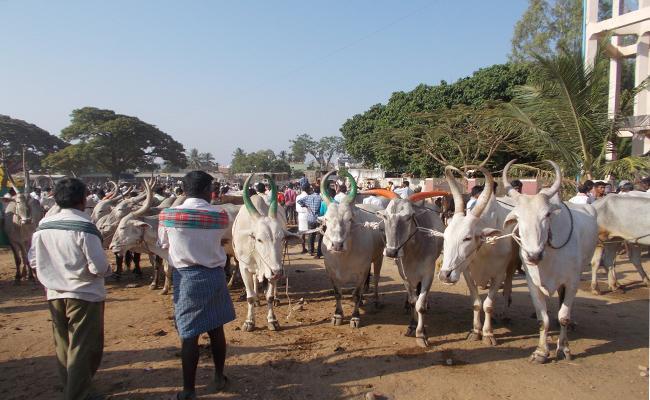Karnataka People Suffering With Drought - Sakshi