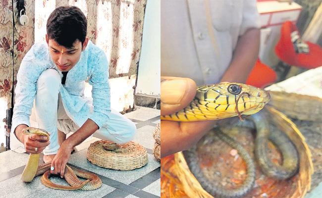 Awareness on Nagulachavithi Festival Milk Feed to Snake - Sakshi