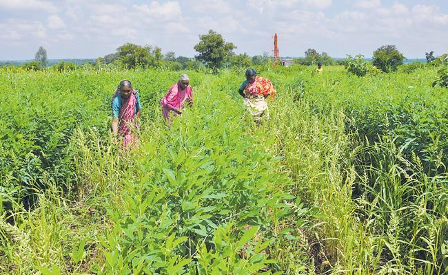 Organic farming Special Story - Sakshi