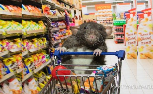 Japans Family Mart convenience chain Apologies for Rats in Store - Sakshi