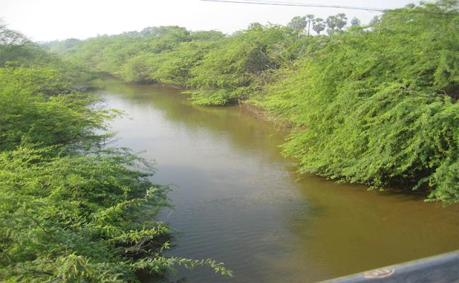 Buckingham Canal was invaded In Prakasam - Sakshi