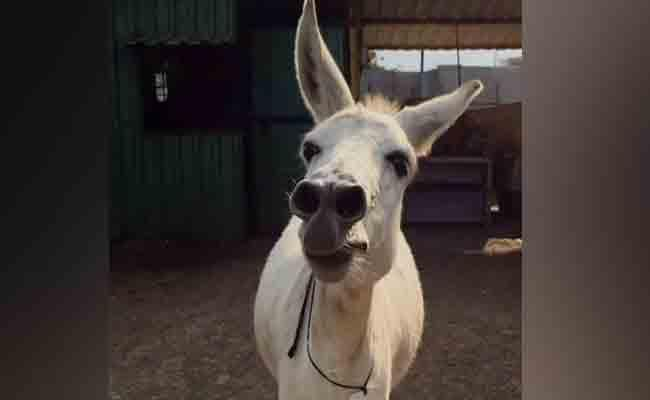 Pune Singing Donkey Becomes An Internet Sensation - Sakshi