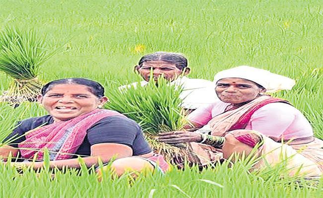 Continuous Rains Spurring Crop Development - Sakshi