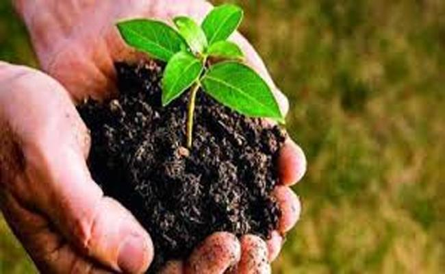 Case filed Against the Person who Removed the Plant in Siddipet - Sakshi