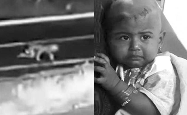 Baby Crawls On Kerala Road After Falling Off SUV in Kerala - Sakshi