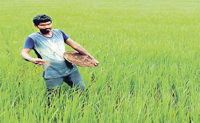 Organic urea For Rice Corp - Sakshi