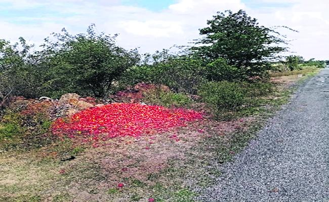 Tomato Prices Are Receded Farmers Are Worrying In Ananthapur - Sakshi