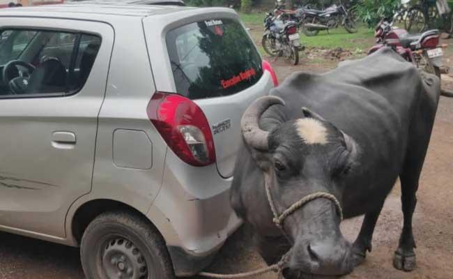 Madhya Pradesh Official Asks Bribe Gets Buffalo in Return - Sakshi