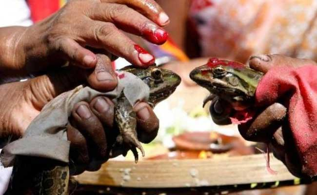 Madhya Pradesh Frogs Divorced to Stop Rains in Bhopal - Sakshi