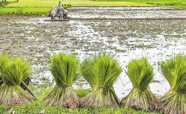 Palamuru Top In Farming In Telangana - Sakshi