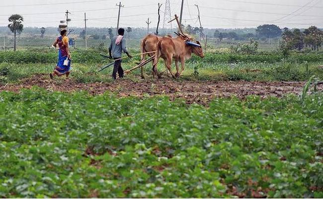 Nalgonda Stands First In Cultivation  - Sakshi