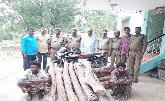 Sandalwood Smuggling in YSR Kadapa - Sakshi